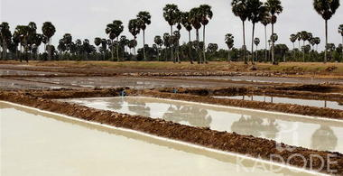 Siam flower of salt production