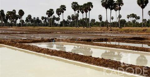 Saline fleur de sel de Kampot